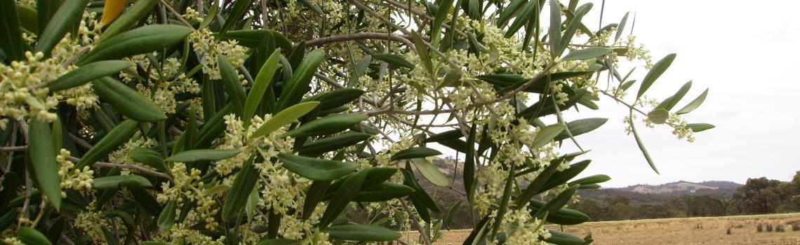 2015 Flowers early in the Growing Season